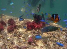 海体験ギャラリー