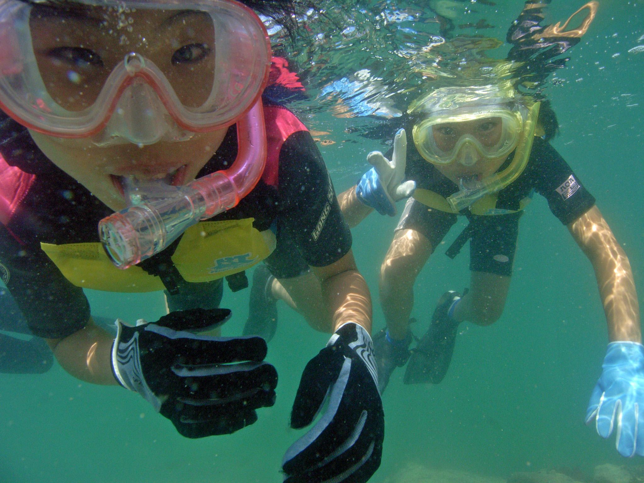シュノーケリング体験によるサンゴの調査